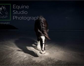 Black Velvet - The Beach Walk,  Fine Art Print, Equine Photography
