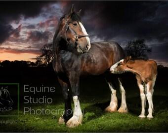 Shire Horse Sunset 3,  Fine Art Print, Equine Photography