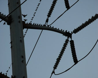 Coming and Going - bird photograph - urban nature flight twilight power line