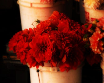 Flowers of Red