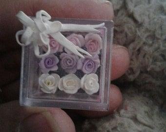Miniature roses