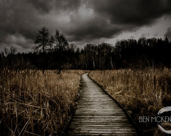 Wooden Pathway Photo Print