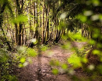 Photo of forest, path in nature