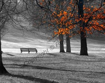 Digital Download, ''Greenwich Park'', photography by Roger Pan