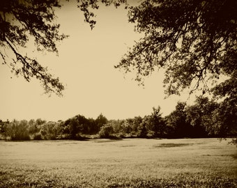 Nature trees landscape photography *In Sepia*