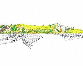 ILLU - sperm whale
