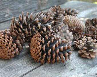 Pine Cones, Bulk Pine Cones