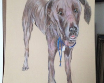 Custom dog portrait.