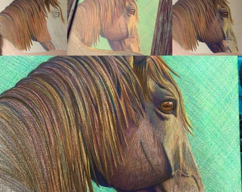 Custom colored pencil horse portrait