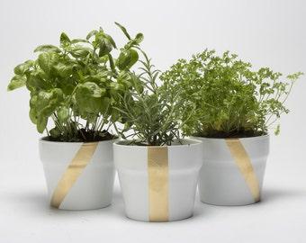Exquisite Herb Garden Kit