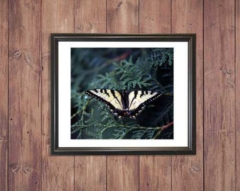 Butterfly Digital Photography, Digital Download, Digital Print, Wall Art