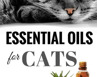 essential oils for cats safe effective therapies and remedies to keep your cat healthy and happy cat safe furniture