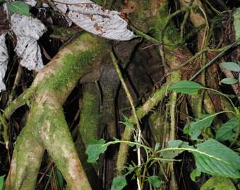 El Yunque Rainforest, Puerto Rico/Nature and Landscape Photography