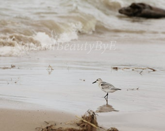Shore bird on beach, Lake Huron shore, sandpiper, beach photography, bird photography, bird print, nature, wall art, fine art, print