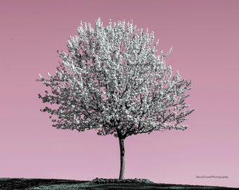 Lone Tree and Pink Sky