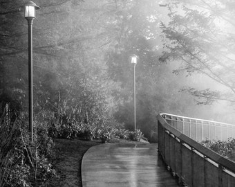 The Foggy Path