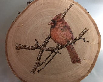 Cardinal on Birch Pyrography