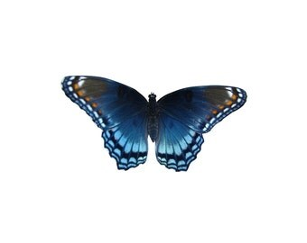 Red Spotted Purple - Butterfly Vinyl Decal - Varying Sizes