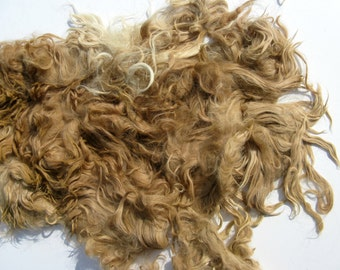 Fawn Suri Alpaca Fleece -  Fiber for Spinning, Felting, and Dolls -  Unwashed Fibre - 12 ounces from Masterpiece