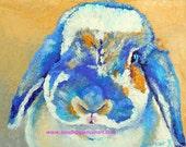 "Original Minilop Rabbit Oil Painting 8""x10"" NOT a print"