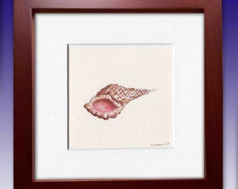 Seashell - Original Miniature Painting