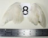 Taxidermy Quail Wings - One Pair
