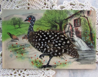 Vintage FEATHER Bird Postcard..Foreign