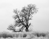 Winter Landscape, Big Black Tree in Tall Grass, Black and White Landscape Photograph, Landscape photo, Picture of a tree