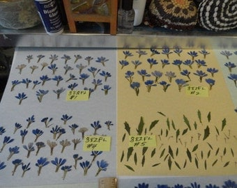 Choose your Real Pressed Flowers Grown in Alaska  Fan Flowers 382 FL