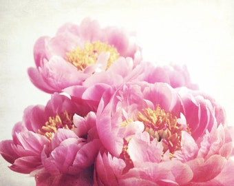 Pink peony print - floral wall art - botanical photograph - pink nursery decor - peony flowers 16x20 - Peony Seven