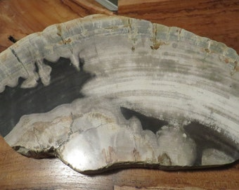 XL Polished Petrified Wood Display Plate Slab Slice