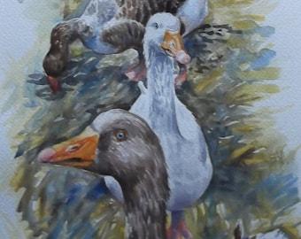 Geese - Original Watercolour Painting