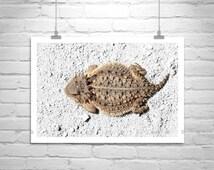Reptile, Lizard, Wildlife Photography, Horny Toad, Horned Toad, Horned Lizard, Cute Animals, Arizona, Nature Photography, MurrayBolesta