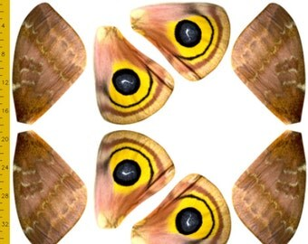 io Moth Fabric Panel for Costume Wings - 100% Cotton Woven