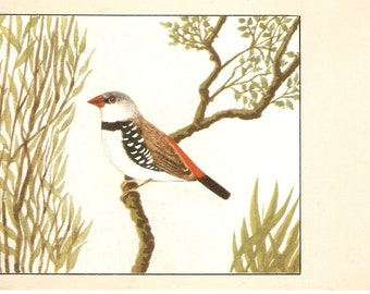 Bird postcard, vintage postcard - Diamond Sparrow Postcard, tree branch vintage postcard vintage postcard, SharonFosterVintage