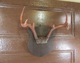 Reduced.....Old mounted antlers on board- very nice vintage home decor, primitive, great shape, beautiful, solid, ready to hang