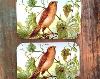 Bird tin large