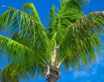 Palm Tree Portrait-8x10-Color Fine Art Photo-Certificate of Authenticity-Signed by Artist
