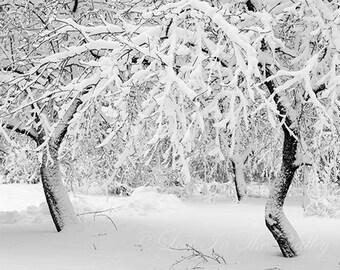 Winter Photography, Snow Photograph, Rustic Wall Decor, Fine Art Photo, Nature Scene, Landscape Print, Scenic Photograph, Adirondacks, Grey