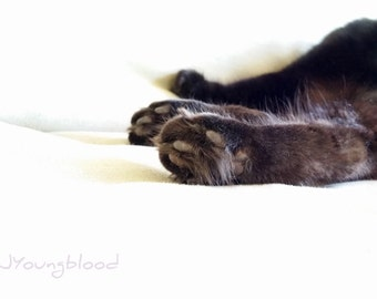 Photograph: Sleeping Black Cat Paws 5x7 print Nature Photography Black and White