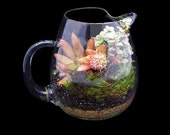 SUCCULENT TERRARIUM - from my succulent and cactus gardens, succulents, plants, plant,TERRARIUM succulents,potted succulents,glass