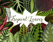 Vintage Tropical Leaves  Watercolor Clipart.