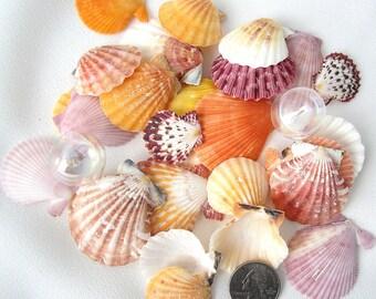 Beach Wedding Shells Scallop Shells - Nautical Decor Seashells -Scallops- Beach House Decor - Small Scallop Sea Shells - Coastal Decor 12 PC