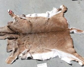 Large Whitetail Deer Hide- Medium Haired- Lot No. 160626-N