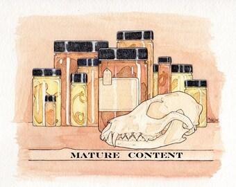 Wet Preserved Western Coyote Heart - Jarred Specimen- One Assorted Heart