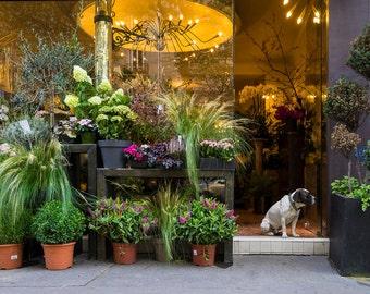 Paris Photo Flower Shop Photograph France Print Neutral Colors Paris Decor Wall Art Cute Dog Home Decor par150