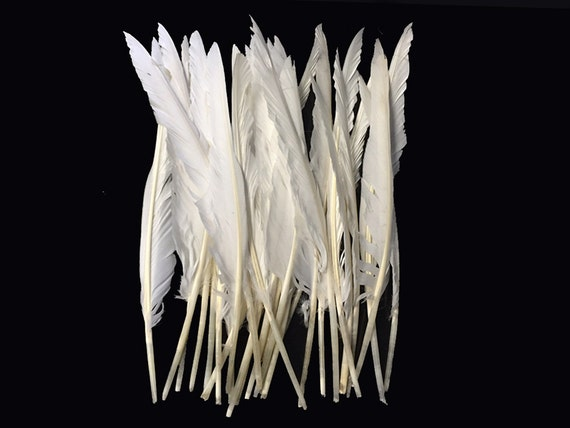 10 Pieces - NATURAL WHITE Goose Pointers Long Primaries Feathers : 4073