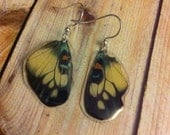 Real Butterfly Wing Earrings, Earthy Organic Jewelry, Natural, Bohemian Jewelry, Unique Gift, BW037