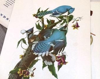 Vintage Audubon Bird Prints - Set of 18