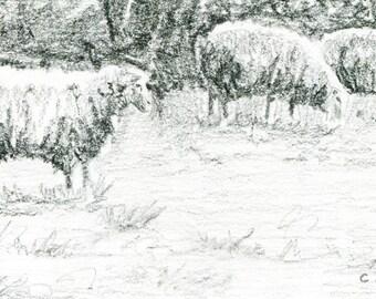 Original Sketch of a Three Sheep - 4 x 6 Art for Sale